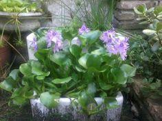 Mis plantas acuáticas!!!
