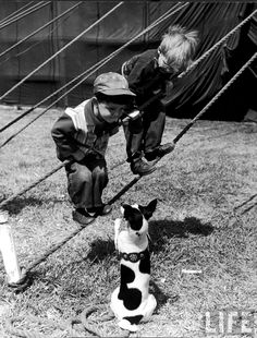 Nina Leen: Little boys outside circus tent playing with a dog. Sarasota, 1949