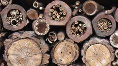 Detaljer fra et insekthotell - I trestokker og murstein borer du avlange hulrom, og supplerer med hule stengler og kvister fra takrør-plante...