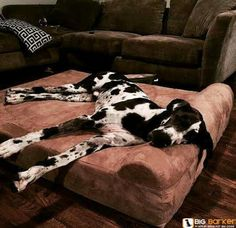 Dog bed actually made for great danes!! Big Barker Beds. Have one and Love it!! 10 year no flatten guarantee! Made in the USA
