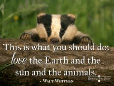 This is what you should do: love the Earth and the sun and the animals #Whitman