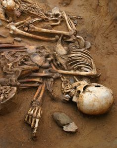 Five skeletons were found in a Late Bronze Age pit, this one appears to be pointing towards the centre of a large horshoe ditch which was the focus of ceremonies. There is a piece of chalk in his left hand.
