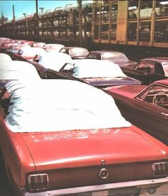 1965 Ford Mustang Models LineUp, Loading On Train Transport Ford Mustang Models, Ford Mustang 1964, Mustang Cars, Ford Mustangs, Shelby Mustang, 1964 Ford, Classic Mustang, Ford Classic Cars, Volkswagen