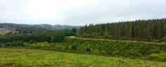 La route entre Peyrelevade et Millevaches, vers 900m de hauteur
