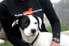 5 Amazing Pit Bull Rescue Groups Fighting for Change (short article)