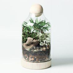 Tiny Terrarium DIY Kit
