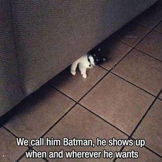 Batman Cat on theBERRY