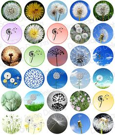 Dandelions Digital Collage Sheet One Inch Circles $3.00, via Etsy.