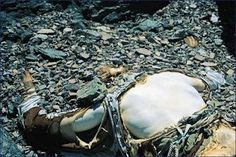 Giles Milton: A CORPSE ON EVEREST: THE DEADLY FINAL HOURS OF GEORGE MALLORY.