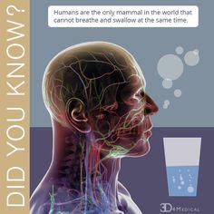 Did You Know? #anatomy #medical #health