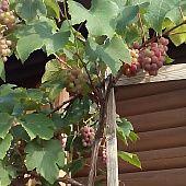 PAGÁČE - len tak k vínečku (fotorecept) - recept Naan Flatbread, 20 Min, Lens, Klance, Lentils