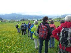 Wanderung 29. April 2014: Quer über blühende Wiesen nach Wissbad