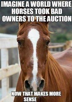 - Horses Funny - Funny Horse Meme - - The post appeared first on Gag Dad. Funny Horse Memes, Funny Horse Pictures, Funny Horses, Cute Horses, Horse Photos, Funny Animal Memes, Horse Love, Beautiful Horses, Horse Humor