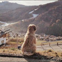 Berger de Brie, Briard, Bodi, Reiselust, San Cassiano, Berge, Dolomiten, Alta Badia, wandern, hiking
