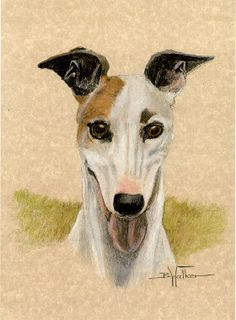Greyhound Art Prints - Happy Boy by Barbara Walker Greyhound Art, Italian Greyhound, Magyar Agar, Skinny Dog, Lurcher, Happy Boy, Ink Drawings, Whippets, Greyhounds