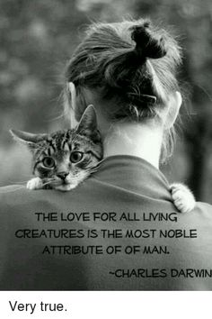 To have an animal welcomed and loved into your home and give and receive that special love for the duration of ours and their whole lives is humbling, loving and very, very, very special. This goes out to all you lucky and kind ones out there 😻 . Animal Lover Quotes, Cat Quotes, Smile Quotes, True Love Meme, Crazy Cat Lady, Crazy Cats, Animals And Pets, Cute Animals, Animal Rights