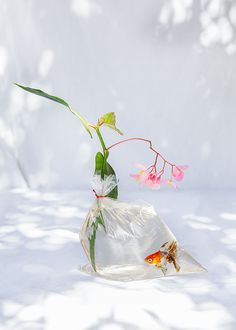 Nicole Valentine Don X Annie Martin still life. Still Life Photography, Creative Photography, Nature Photography, Still Life 2, Still Life Photos, Dappled Light, Contemporary Photography, Commercial Photography, Ikebana
