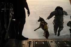 A Military Dog Jumping Out of a Helicopter