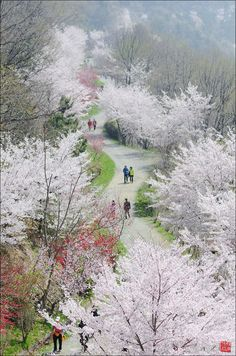 Dream Road..... Jinhae-gu, South Korea