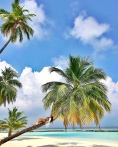 The Maldives Islands #Maldives  Photo @chriss_jay  #beautifulday #relaxing #palmtree #beachday #seaside #enjoylife #daydreaming #purebliss #tropical #experience #islandvibe #lifestyle #sweetmemories #paradise #anotherdayinparadise #vacationmode #lifewelltravelled #happiness #happyplace #inspiration #travel #mood #thinkaboutit