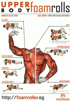 Foam Roller Exercises Infographic for Upper Body Foam Roller Exercises Infographic for Upper Body Upper Body Stretches, Upper Back Exercises, Body Exercises, Roller Workout, Gym Workout Tips, Workouts, Workout Body, Workout Routines, Sport Fitness