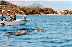 Mauritius swimming with the dolphins  – wanaabeehere