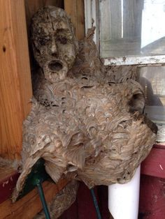 Família abre galpão fechado há anos e faz descoberta assustadora...
