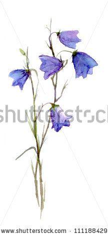 bluebell flower by le panda via shutterstock