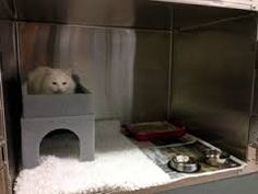 Resultado de imagen de feline cat friendly waiting room