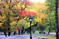 Love Autumn in Central Park