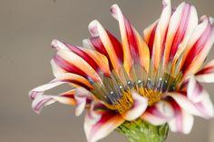 sacar fotos a flores da mucho placer...porque no se resisten.