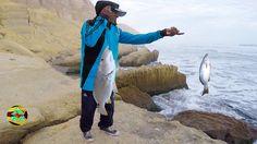 Pesca De Corvinas   Pesca