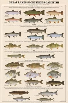 An absolute must for serious Great Lakes anglers! This chart includes all the salmon and trout species, all the perch (including walleye and sauger), sunfish, Great Lakes musky and. Trout Fishing Tips, Walleye Fishing, Salmon Fishing, Kayak Fishing, Fishing Knots, Saltwater Fishing, Fishing Shack, Gone Fishing, Best Fishing