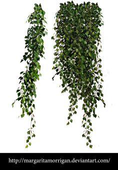 birch leaves by margarita-morrigan.deviantart.com on @DeviantArt