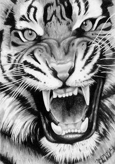 Roaring Tiger - Graphite Drawing by JasminaSusak on DeviantArt