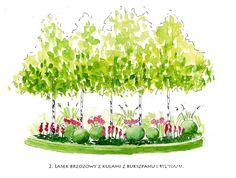 W basiowie - kiedyś tu będzie ogród... - strona 7 - Forum ogrodnicze…