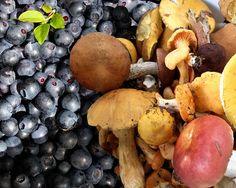 Mushberries by alexander.esenin _____________________________  #naseliger #кемпинг #рыбалка #природа #лето #туризм #путешествия #отдых #отпуск #отдыхнаприроде #летнийотдых #селигер #выходные