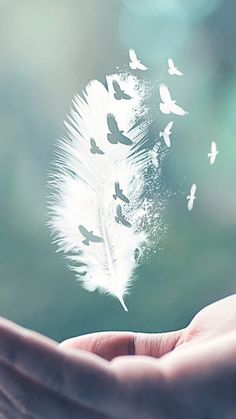 I do not own or claim any photo's music just sharing beautiful artwork and great music. Butterfly Wallpaper, Nature Wallpaper, Wallpaper Backgrounds, Wallpaper Art, Feather Wallpaper, Amazing Wallpaper, Creative Photography, Nature Photography, Photography Lighting
