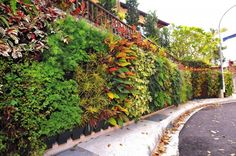 The VGP tray living wall system