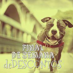 Final de semana de preços baixos no Bichonaweb.com.br. Aproveite!!!    #Bichonaweb #promocao #cachorrosdobrasil #cachorroetudodebom #petsdobrasil #desconto #ofertas
