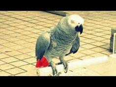 Explore Crazy Bird, Parakeet, and more!