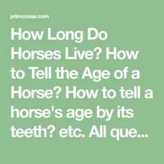 How Long Do Horses Live? How to Tell the Age of a Horse? How to tell a horse's age by its teeth? etc. All questions will be answered and explained.