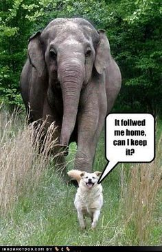 ha ha ha ha I love this!  #funny #dog #elephant