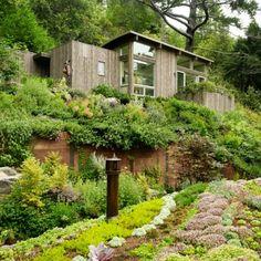 Projekt 'Mill Valley Cabins' autorstwa amerykańskiej firmy Feldman Architectrue to rozszerzenie istniejącego już domu w miejscowości Mill Valley w Kalifornii. Teren znajduje się na bardzo stromym zboczu w lesie. http://www.sztuka-krajobrazu.pl/93/slajdy/nowoczesny-ogrod-w-srodku-lasu