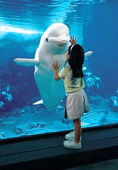 Albino dolphin wants to play and cuddle again. The little girl ve . - Albino dolphin wants to play and cuddle again. The little girl ve … – Albino dolphin wants to p - Cute Baby Animals, Animals And Pets, Funny Animals, Anime Animals, Wild Animals, Amazing Animals, Animals Beautiful, Hello Beautiful, Beautiful Images