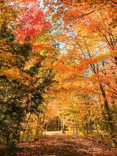 Kingston Canada, Manitoulin Island, Vacation Trips, Vacation Ideas, Ontario Travel, Autumn Park, Autumn Scenery, Autumn Photography, Canada Travel