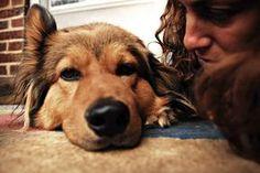 Aprenda como falar com seu cachorro