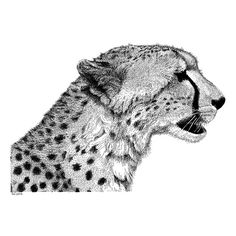 Cheetah Pen and Ink Drawing