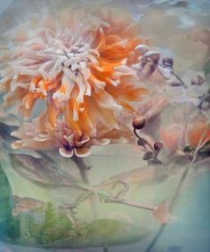 Kimono by John Grant Studios.  Flowers drifting in a giant vase, left to decay to varying degrees and photographed using natural lighting.  ©John Grant, 2011