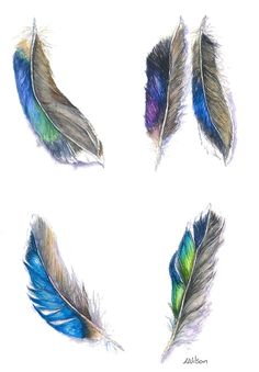 Feathers from the Mallard Duck by Laura Wilson